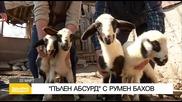 """В """"Здравей, България"""" на 22 март очаквайте"""