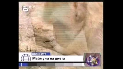 Господари На Ефира - Debeli Maimuni