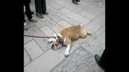 Най - отчаяното куче на света