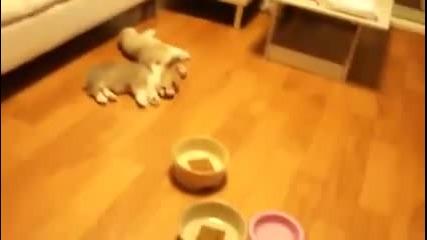Сладки кученца скачат от сън:)