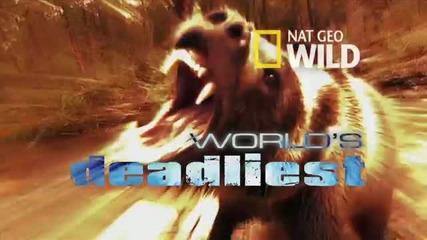 Лъвове срещу африкански глиган