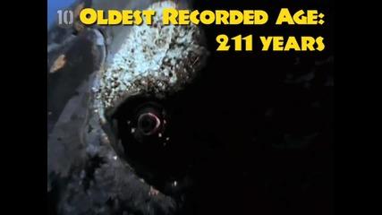 10-те най дълго живеещи същества