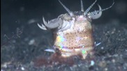 Bobbit worm - Страховитият червей!
