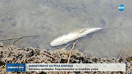 Проверяват сигнал за мъртва риба в река Марица