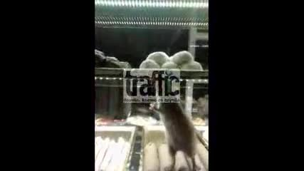 Мишка в сладкарница в Пловдив
