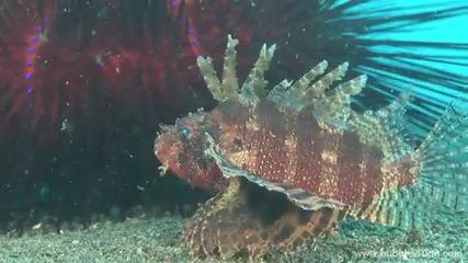 Какъв е живота под водата?
