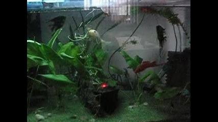 аквариум с рибки и водопад от пясък