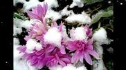 Елегия за замръзналите цветя... ...