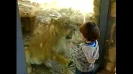 Дете Се Базика С Лъв