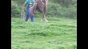 Ездач
