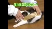 Котка С Тиксо :)