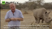 Only Four Northern White Rhinos Remain on Earth