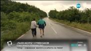 """""""Пълен абсурд"""": Прасенца играят на гоненица по натоварен път"""