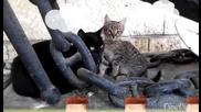 семейство Котки