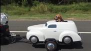 Куче със собствено возило