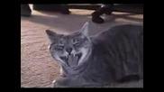 Смях на луда котка !!