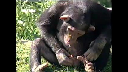 Никога не целувайте маймуна ! ! !