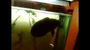Рибока ми гледа мач
