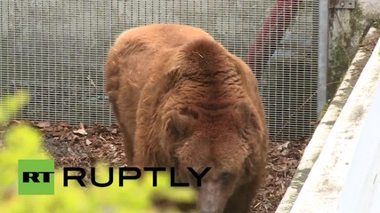Germany: Berlin's mascot bear 'Schnute' may have to be put down
