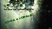 Звуци от природата - Дъжд в гората