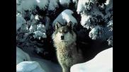 Вълкът и Седемте козлета ` детски песнички