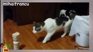 Страшно забавни уплашени котки