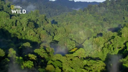 Джунглата Чоко в Колумбия