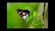 Armik - Островът на съкровищата Пеперуди - нежни и красиви