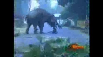 Слон Смазва Човек