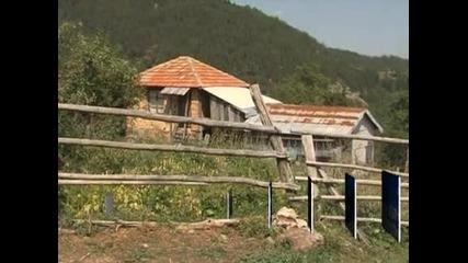 Вълци нападат села и унищожават стада от овце в района на Рудозем