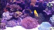 Моят соленоводен аквариум 111