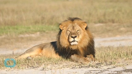 Cecil the Lion's Killer Should Be Extradited: Zimbabwe