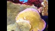 Sps корали в рифов аквариум
