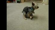 Най - перверзното куче