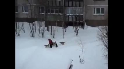 Ужас! Кучета нападат момиче, тя едвам се спаси