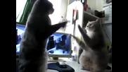 Сладки котета си играят