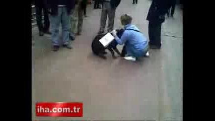 котка напада свирепо ротвайлер
