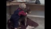 бебе напада питбул