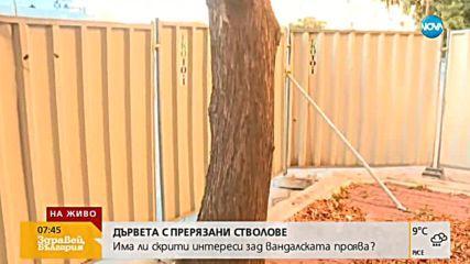 Снимки на дървета с прерязани стволове разгневиха социалните мрежи