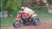 Куче моторист!