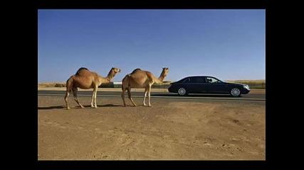 Такива са колите в Дубай!