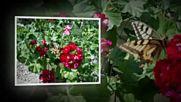 Цветята през април в двора ми на село Целина