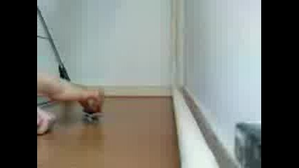 Fingerboard Mini