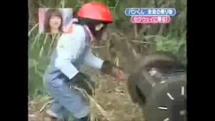 Шимпанзе се вози на Segway