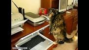 Котешки Премеждия