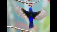 Детски песнички - Птички