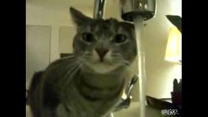 Лудо коте показва как не се пие вода