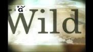 Nat Geo Wild Chronicles - остров Baffin Експедиция 07