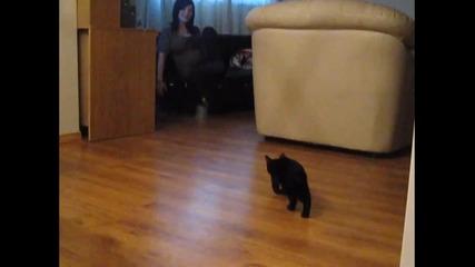 Котка има проблеми с лага