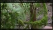 Извънземни: Пришълци щъкат из гори и планини